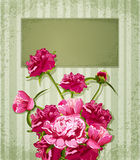 Vector holiday greetings with Peonies. The vector holiday greetings with Peonies Royalty Free Stock Images