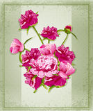 Vector holiday greetings with Peonies Stock Photo