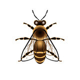 Vector Honey Bee. On White Background Stock Photo
