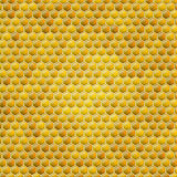 Vector honey combs background Stock Photography