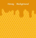 Vector honey drip on honeycombs Stock Photos