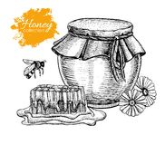 Vector honey vintage illustration. Hand drawn. Royalty Free Stock Images