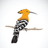 Vector of hoopoe on white background. Stock Photos