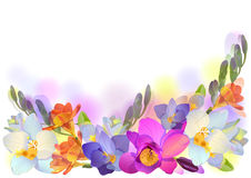 Vector horizontal background with gentle freesia  Royalty Free Stock Image