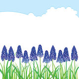 Vector horizontal border with outline blue muscari or grape hyacinth flowers and green leaves isolated on white. Stock Photo