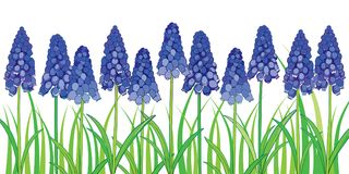 Vector horizontal border with outline blue muscari or grape  Stock Image