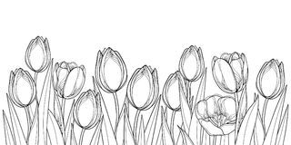 Vector horizontal border with outline tulip flowers, bud and ornate leaves in black isolated on white background. Contour tulips for greeting spring design or royalty free illustration