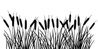 Free Vector Horizontal Bunch Of Bulrush Or Reed Or Cattail Or Typha Leaves Silhouette In Black Isolated On White Background. Stock Photos - 169694913
