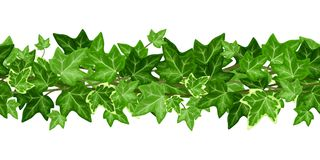Horizontal seamless garland with ivy leaves. Vector illustration. Stock Image