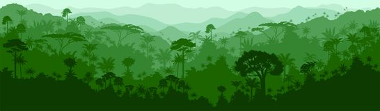 Vector seamless tropical rainforest colombia brazil Jungle background