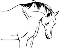 Vector horse Royalty Free Stock Images