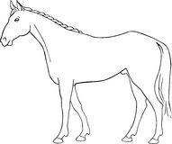 Vector horse Stock Images