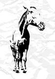 Vector Horse Royalty Free Stock Photo