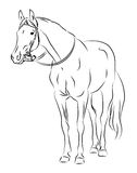 Vector horse with bridle. Sketch Royalty Free Stock Photography