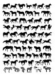 Vector horse silhouettes. The  at a variety of silhouettes Stock Photos