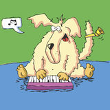 Vector Hound Plays Nice Music Royalty Free Stock Images