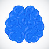 Vector Human brain. The human brain - vector illustration royalty free illustration