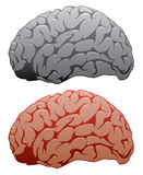 vector human brains Royalty Free Stock Photos