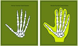 Vector human hand Royalty Free Stock Photo
