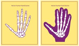 Vector human hand Royalty Free Stock Photos