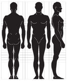 Vector human proportions Stock Image