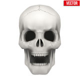 Vector Human skull with open mouth Royalty Free Stock Photo