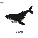 Vector humpback whale. Humpback whale  on white, vector whale silhouette Stock Images