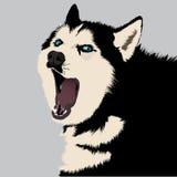 Vector Husky on snow. Vecotor illustration of yawning husky black and white dog Royalty Free Stock Image