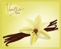 Vector i baccelli della vaniglia e del fiore Fotografie Stock