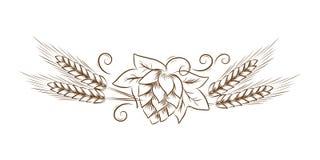 Vector i coni di luppolo con le foglie e la linea l'arte d'annata, schizzo floreale dell'illustrazione del profilo del grano, per fotografia stock libera da diritti