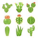 Vector icon set of colored cactus and succulent. Vector set of colored cactus and succulent plants. Decorative  icons illustration. Cartoon style doodles Royalty Free Stock Image
