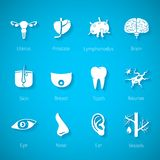 Vector icon set of human internal and external organs in flat style Stock Image