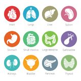 Vector icon set of human internal organs in flat style vector illustration