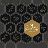 Vector icon set of icons inscribed in honeycombs on the theme of the wild life of birds. royalty free illustration