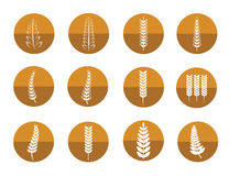 Vector icon set of leaves. On white background Royalty Free Stock Image