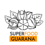 Vector icon superfood guarana. Hand drawn vector icon superfood guarana. Sketch Illustration in vintage style. Design Template Healthy food stock illustration