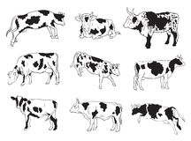 Vector icons of cows Stock Photo