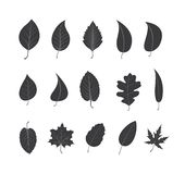 Vector Icons - Green Leaves - Illustration Stock Photography
