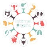 Vector icons of internal human organs Royalty Free Stock Photos