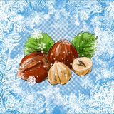 Set of  icons of nuts - hazelnuts, brazil nuts, peanuts, pistachio and ground nuts isolated on white. Vector icons of nuts - illustration nuts on a frosty Royalty Free Stock Images