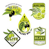Vector icons of olives and Italian olive oil Stock Photos