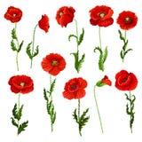 Vector  icons of poppy flowers Stock Photo