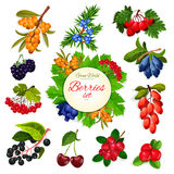 Vector icons set of berries and wildberry fruits Royalty Free Stock Photography