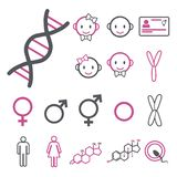 Vector icon set for creating infographics related to gender, transgender and Intersex like DNA, chromosomes, male and female horm stock illustration