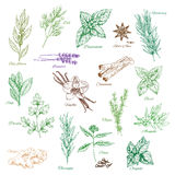 Vector icons spice seasonings or herb flavorings royalty free illustration