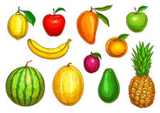 Vector  icons of tropical exotic fruits Stock Photography