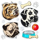 Vector Ikonen farbigen Hund, Bulldogge, Pug, Dalmatiner und eine Schüssel des Knochens Stockfoto