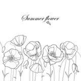Vector il confine con il fiore ed il germoglio del papavero del profilo nel nero isolati su fondo bianco Elementi floreali nello  royalty illustrazione gratis