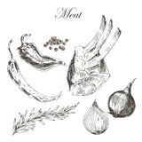 Vector il disegno della mano della carne della bistecca con il pepe e Immagini Stock