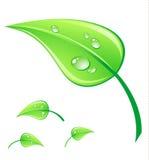 Vector il foglio verde dell'illustrazione Fotografia Stock